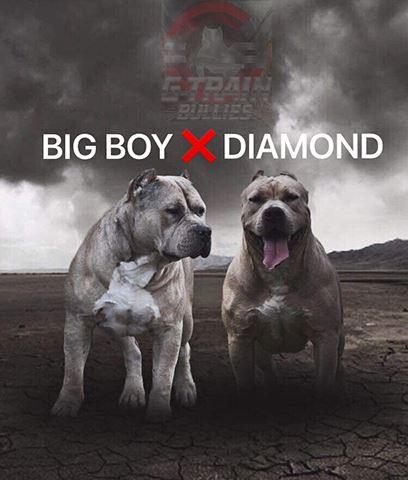 Big Boy X Diamond