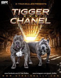 Trigger x Chanel